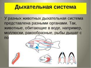 Дыхательная система У разных животных дыхательная система представлена разным