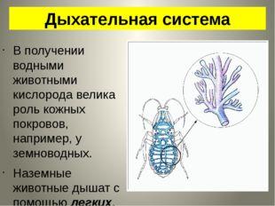 Дыхательная система В получении водными животными кислорода велика роль кожны