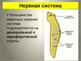 Нервная система У большинства животных нервная система подразделяется на цент
