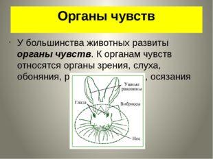 Органы чувств У большинства животных развиты органы чувств. К органам чувств