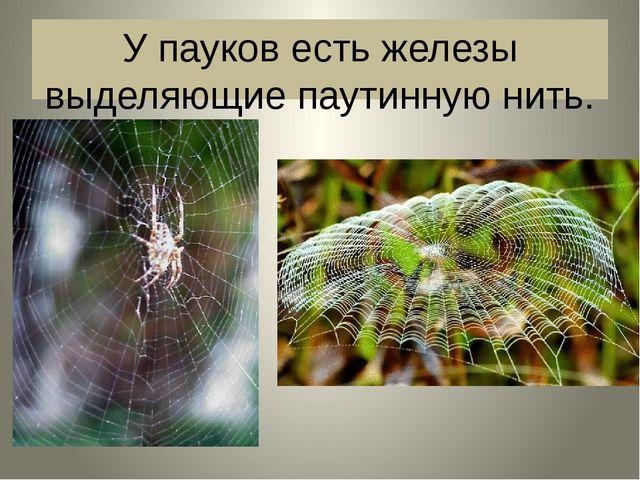 У пауков есть железы выделяющие паутинную нить.