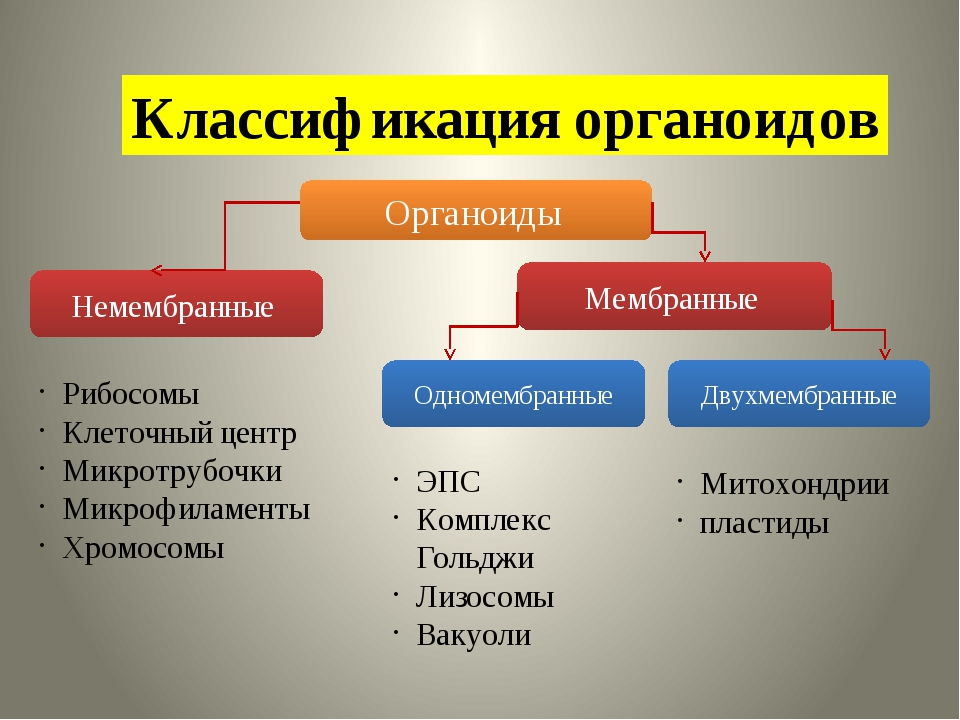 Классификация органоидов Органоиды Немембранные Мембранные Одномембранные Дву...