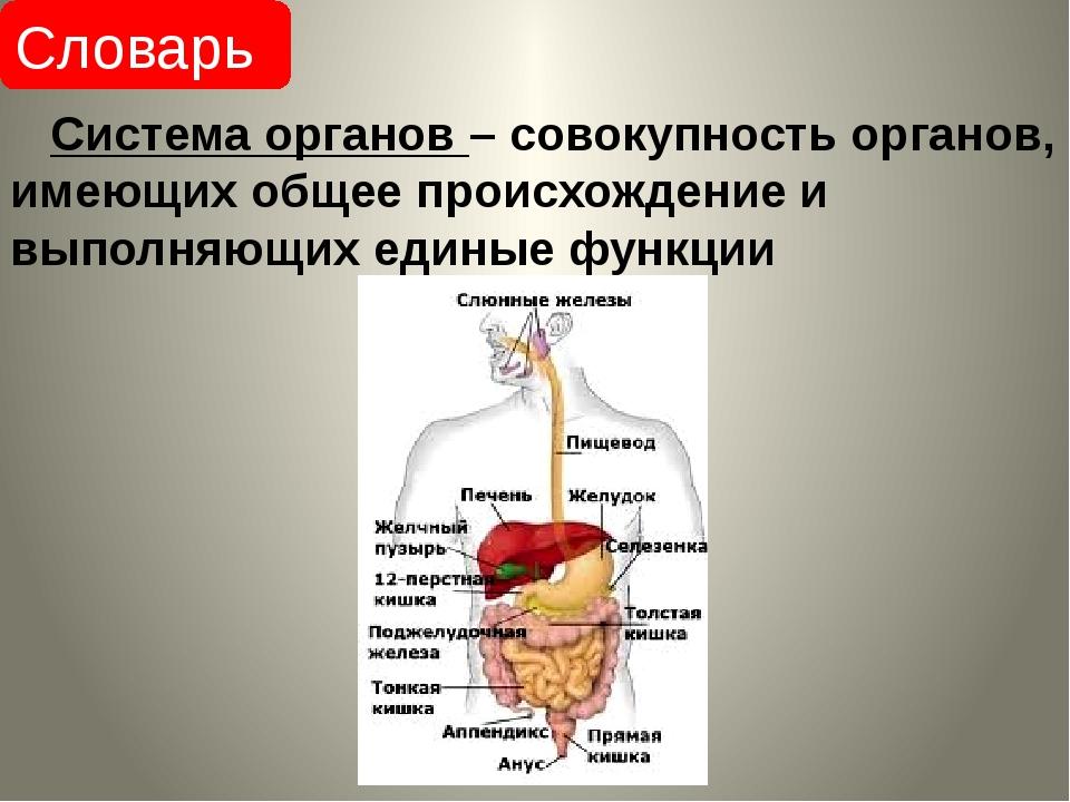 Система органов – совокупность органов, имеющих общее происхождение и выполн...