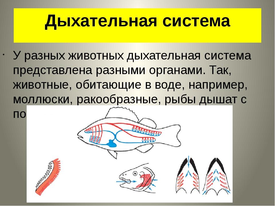 Дыхательная система У разных животных дыхательная система представлена разным...