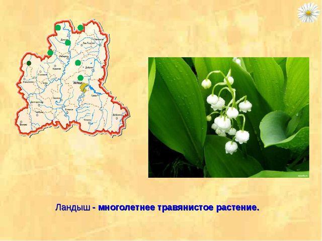 Ландыш - многолетнее травянистое растение.