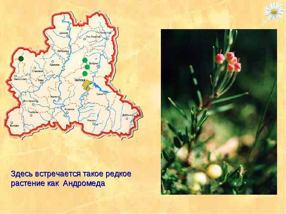 Здесь встречается такое редкое растение как Андромеда