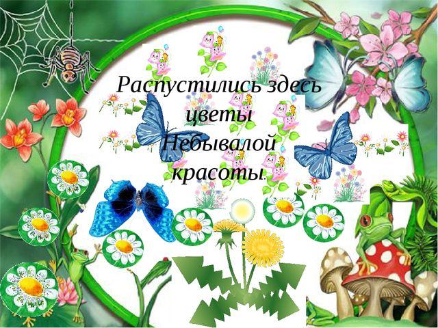Распустились здесь цветы Небывалой красоты.