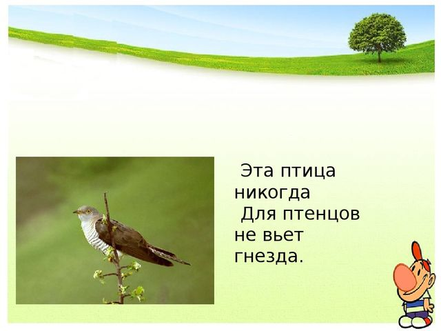 Эта птица никогда Для птенцов не вьет гнезда.
