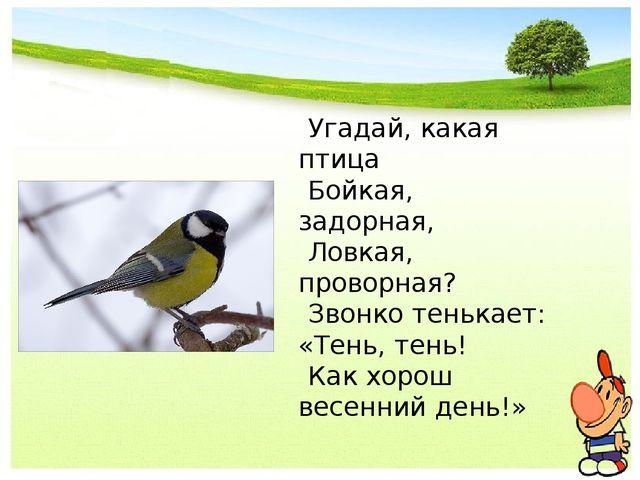 Угадай, какая птица Бойкая, задорная, Ловкая, проворная? Звонко тенькает: «Те...