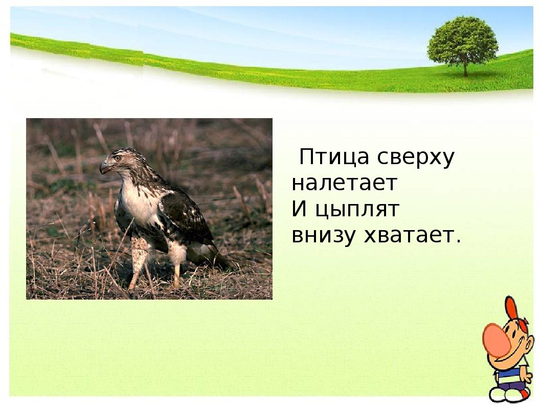 Птица сверху налетает И цыплят внизу хватает.