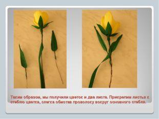 Таким образом, мы получили цветок и два листа. Прикрепим листья к стеблю цвет