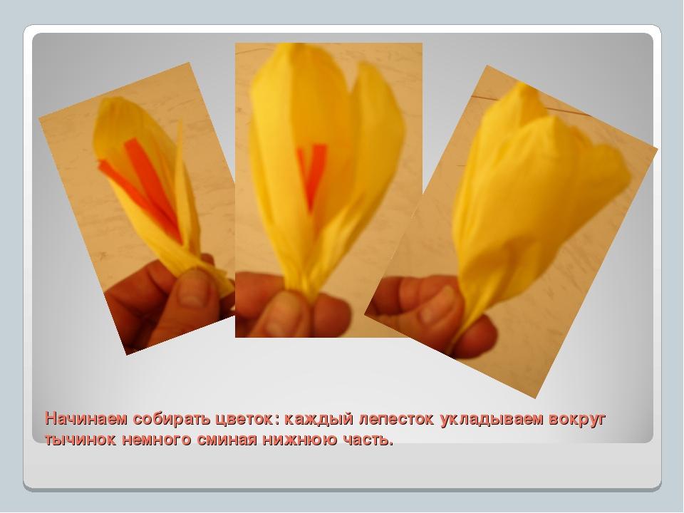 Начинаем собирать цветок: каждый лепесток укладываем вокруг тычинок немного с...