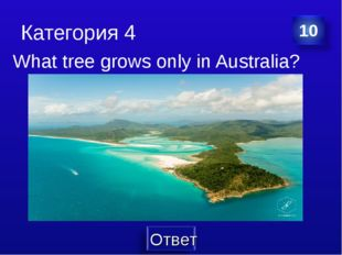 Категория 4 What tree grows only in Australia?