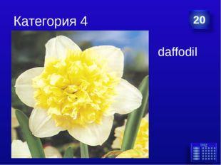Категория 4 daffodil