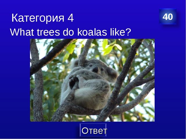 Категория 4 What trees do koalas like?