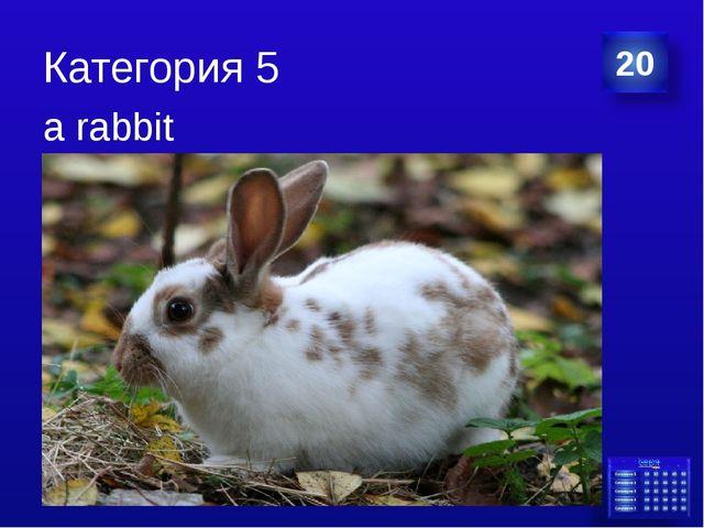 Категория 5 a rabbit