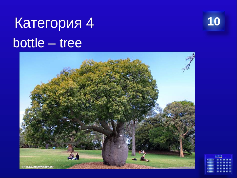 Категория 4 bottle – tree