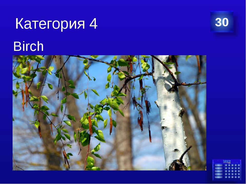 Категория 4 Birch