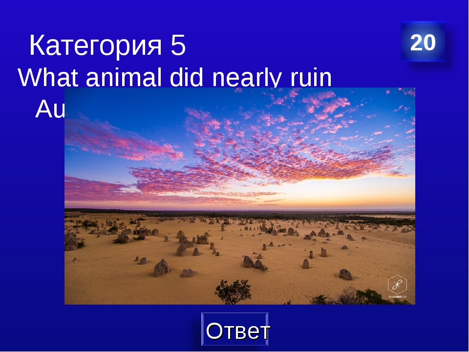 Категория 5 What animal did nearly ruin Australia?