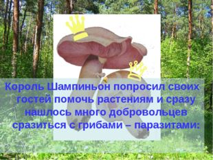 Король Шампиньон попросил своих гостей помочь растениям и сразу нашлось много