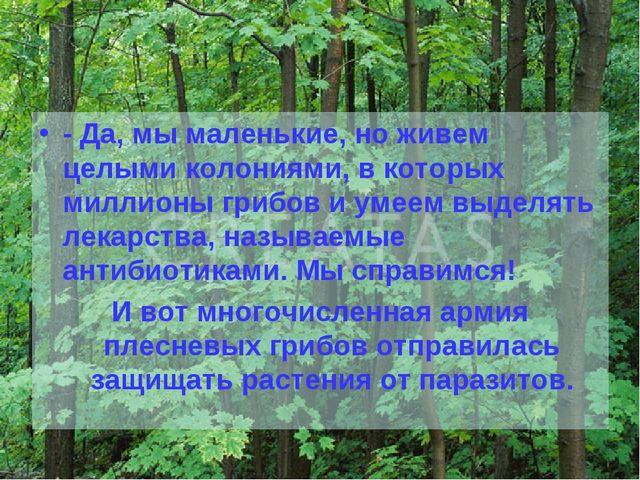- Да, мы маленькие, но живем целыми колониями, в которых миллионы грибов и ум...