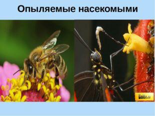 Опыляемые насекомыми