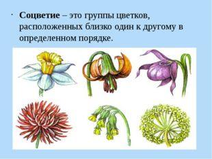 Соцветие– это группы цветков, расположенных близко один к другому в определе