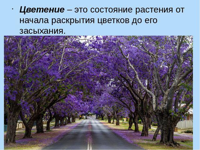 Цветение–это состояние растения от начала раскрытия цветков до его засыхания.