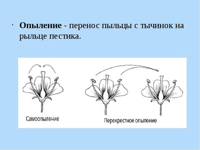 Опыление - перенос пыльцы с тычинок на рыльце пестика.
