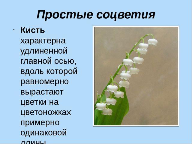 Простые соцветия Кисть характерна удлиненной главной осью, вдоль которой равн...
