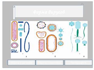Форма вирусов Вирусы у растений Вирусы у животных Бактериофаги