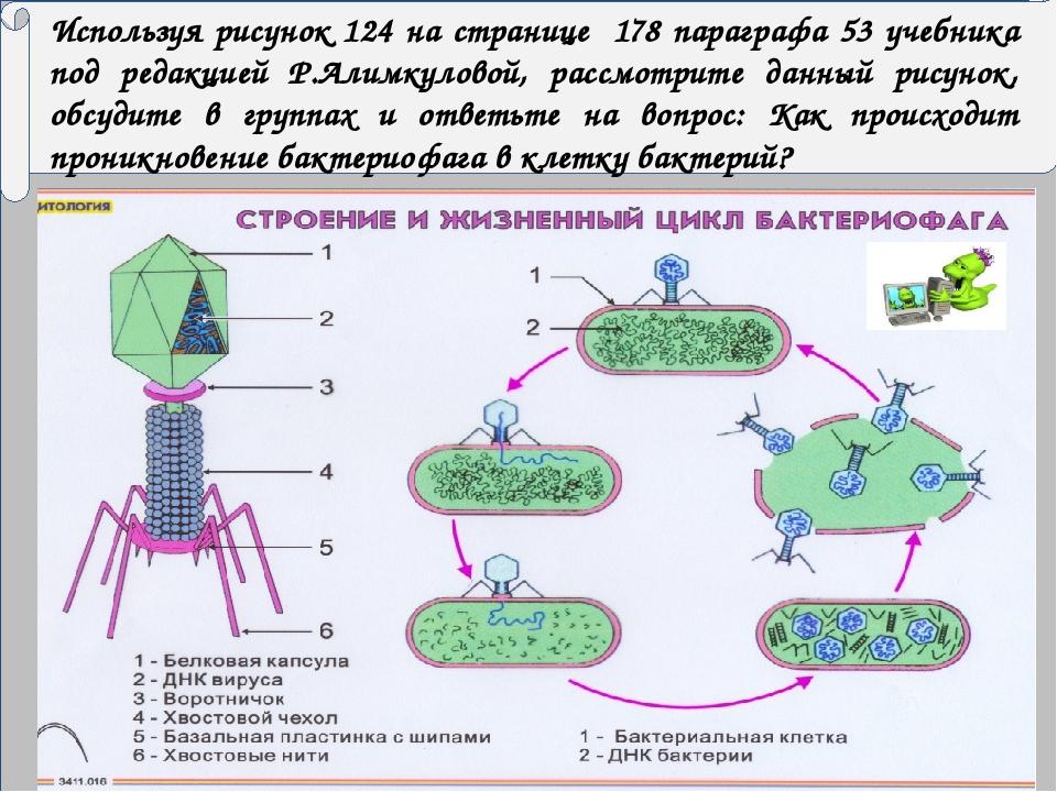 Используя рисунок 124 на странице 178 параграфа 53 учебника под редакцией Р....