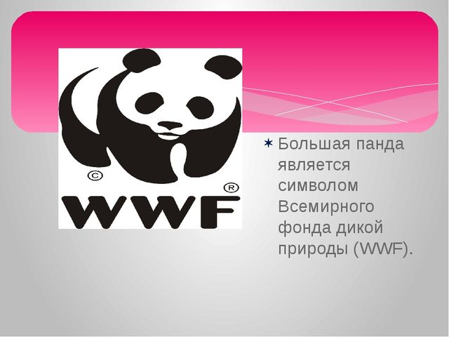 Большая панда является символом Всемирного фонда дикой природы (WWF).