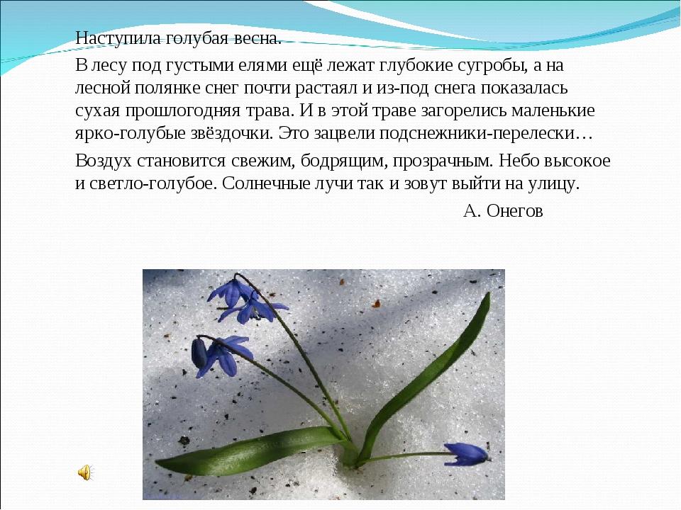Наступила голубая весна. В лесу под густыми елями ещё лежат глубокие сугро...