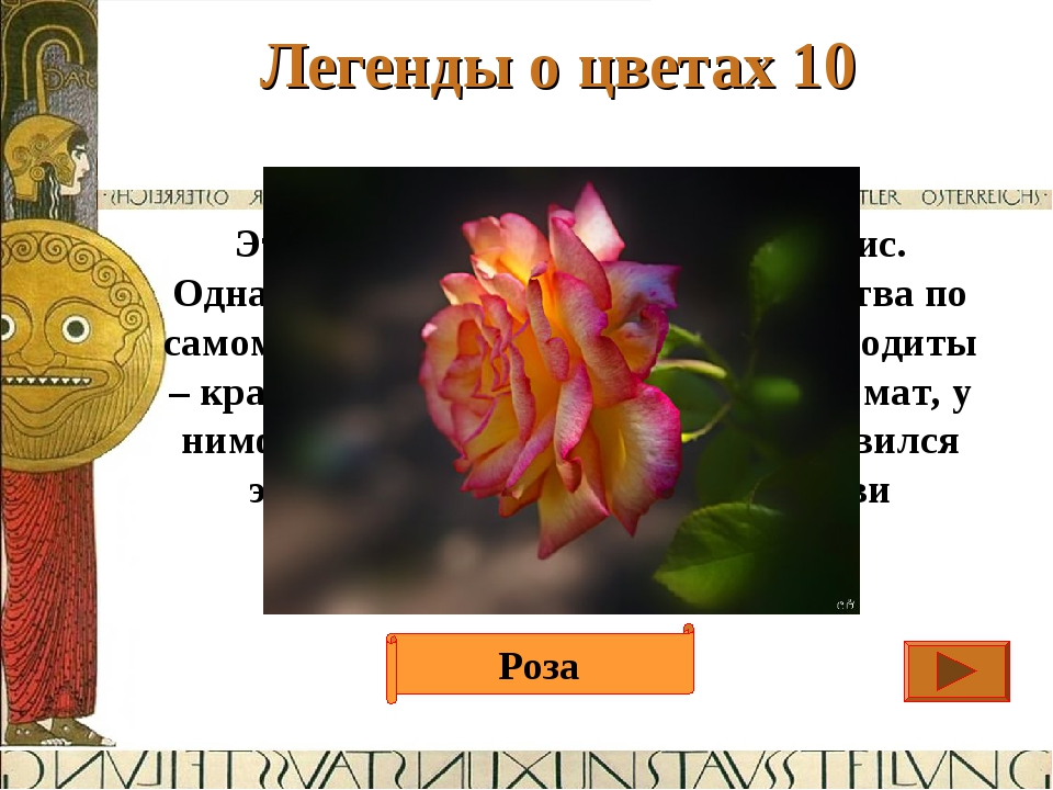 Легенды о цветах 10 Ответ Этот цветок создала богиня Клорис. Однажды она взял...