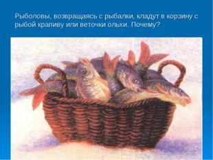 Рыболовы, возвращаясь с рыбалки, кладут в корзину с рыбой крапиву или веточки