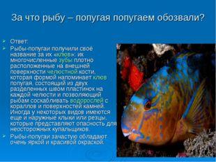 За что рыбу – попугая попугаем обозвали? Ответ: Рыбы-попугаи получили своё на