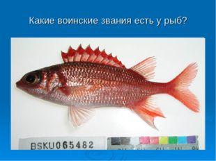 Какие воинские звания есть у рыб?
