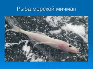 Рыба морской мичман