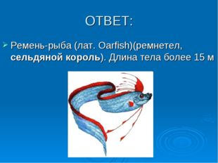 ОТВЕТ: Ремень-рыба (лат. Oarfish)(ремнетел, сельдяной король). Длина тела бол