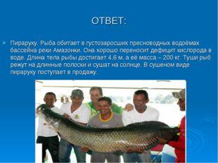ОТВЕТ: Пираруку. Рыба обитает в густозаросших пресноводных водоёмах бассейна