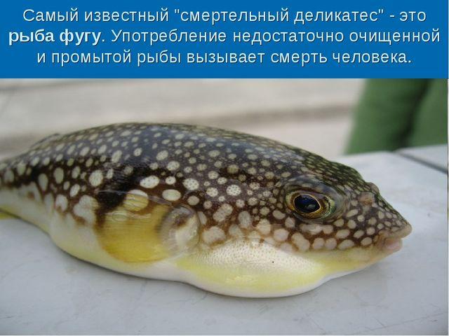 """Самый известный """"смертельный деликатес"""" - это рыба фугу. Употребление недоста..."""