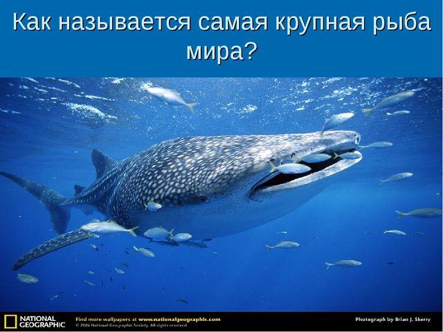 Как называется самая крупная рыба мира?