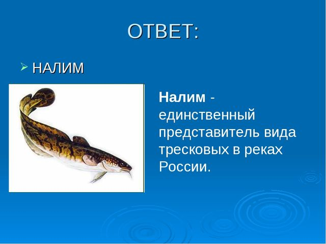 ОТВЕТ: НАЛИМ Налим - единственный представитель вида тресковых в реках России.