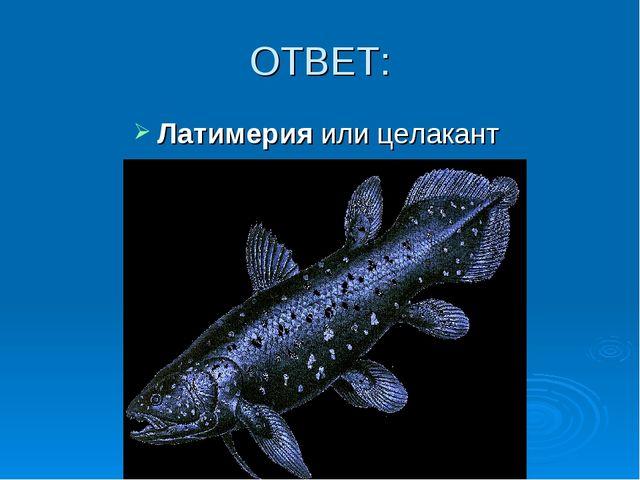 ОТВЕТ: Латимерия или целакант