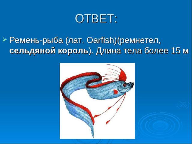 ОТВЕТ: Ремень-рыба (лат. Oarfish)(ремнетел, сельдяной король). Длина тела бол...