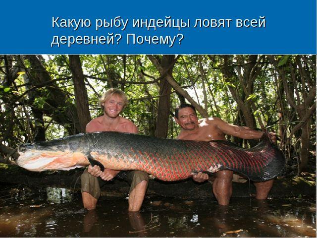 Какую рыбу индейцы ловят всей деревней? Почему?