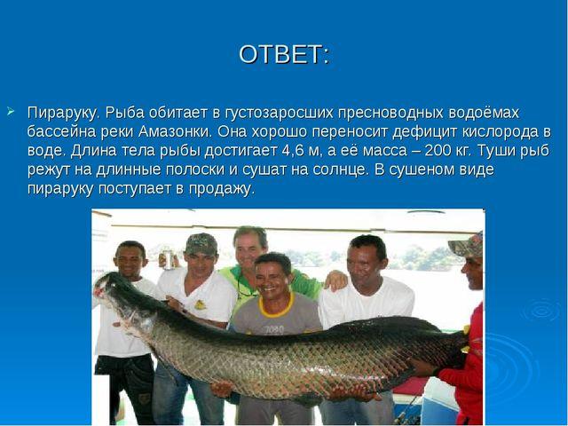 ОТВЕТ: Пираруку. Рыба обитает в густозаросших пресноводных водоёмах бассейна...