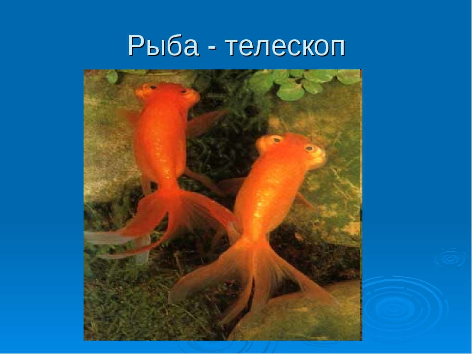 Рыба - телескоп