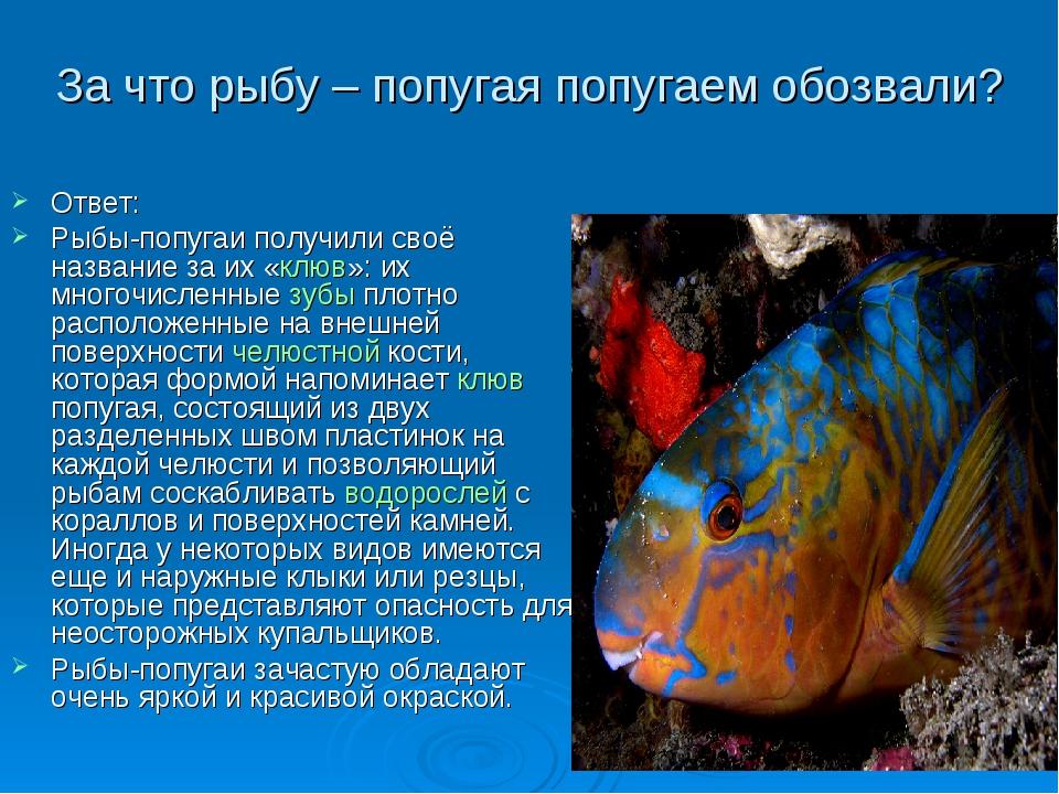Проект о рыбках в картинках